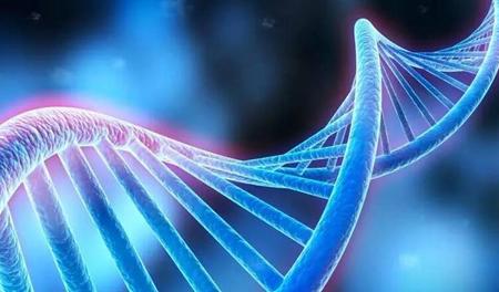 """经权威机构鉴定,该公司培育的比格犬""""龙龙""""与世界首例基因编辑疾病"""